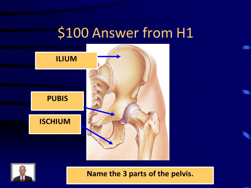 Jeopardy Hip Anatomy Hip Muscles Chronic Injuries Q 100 Q 200 Q