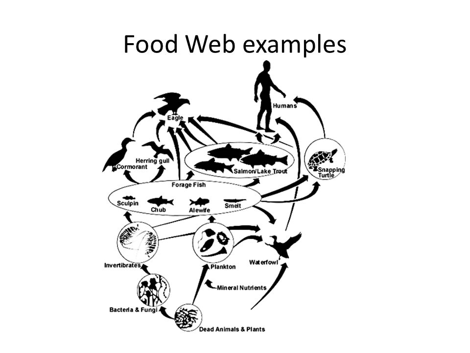Ecology Community Interactions Food Web Notes2 0 Energy And