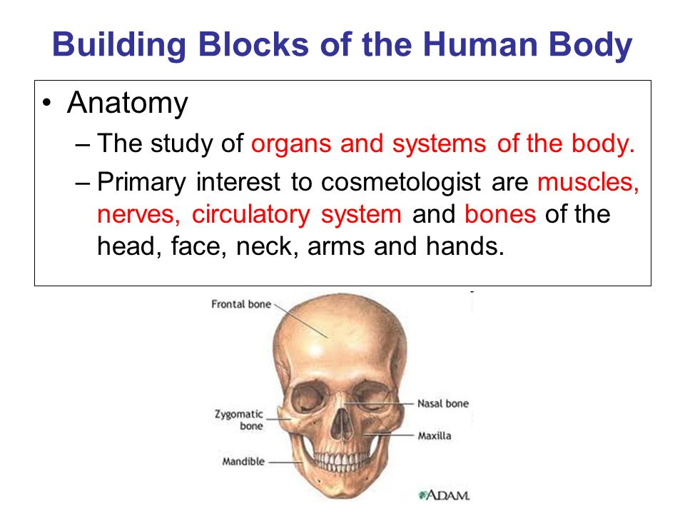 Anatomy and Physiology You will learn: The Building Blocks of the ...