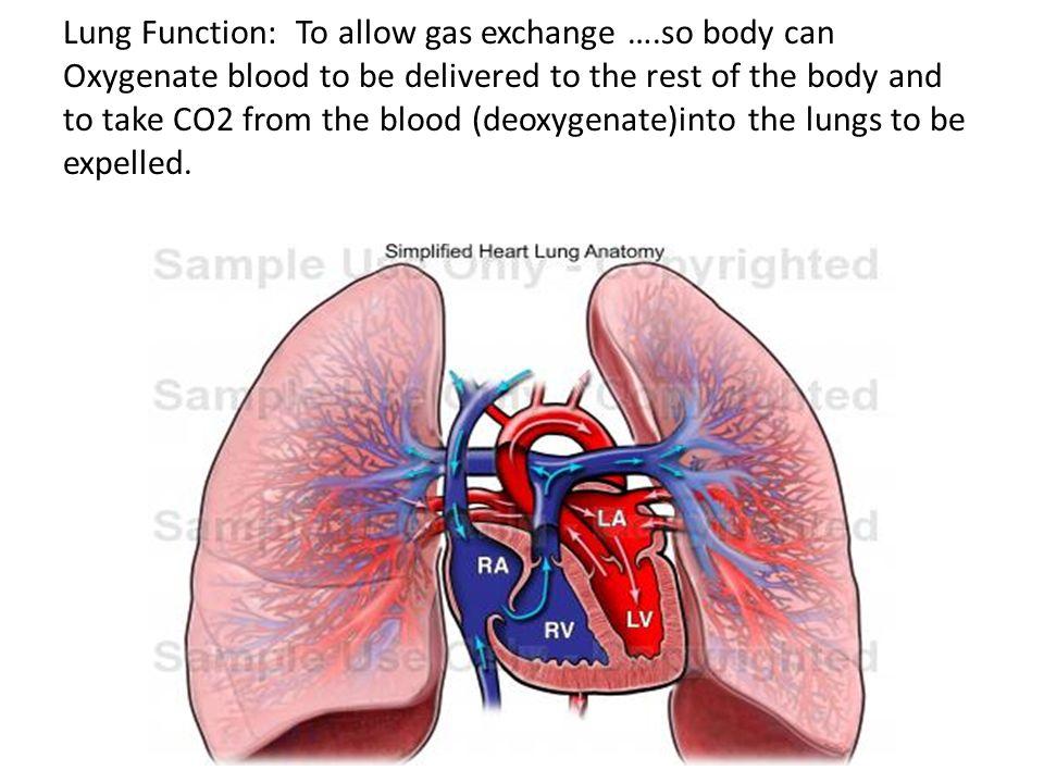 Unit 10 Body Systems Physiology Cardiopulminary System Heart