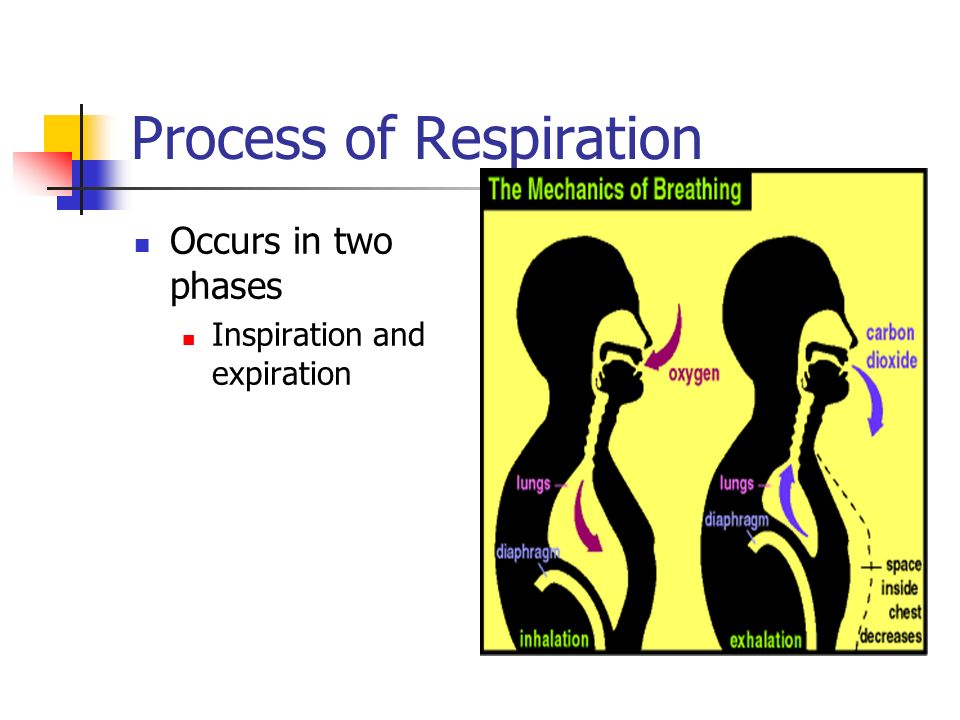 two phases of respiration