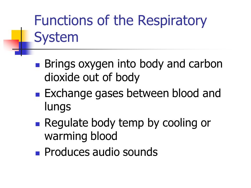 Hst 1 Respiratory System Functions Of The Respiratory System
