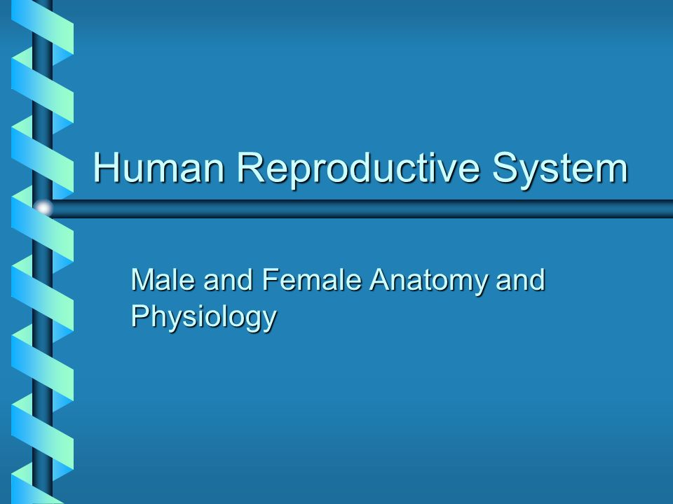Human Reproductive System Male and Female Anatomy and Physiology ...