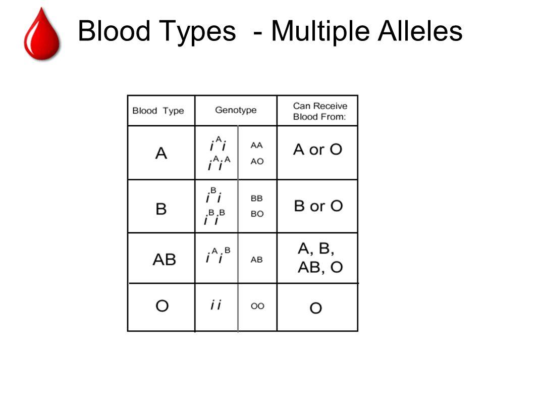 Genetics Multiple Allele Traits Worksheet Topsimages