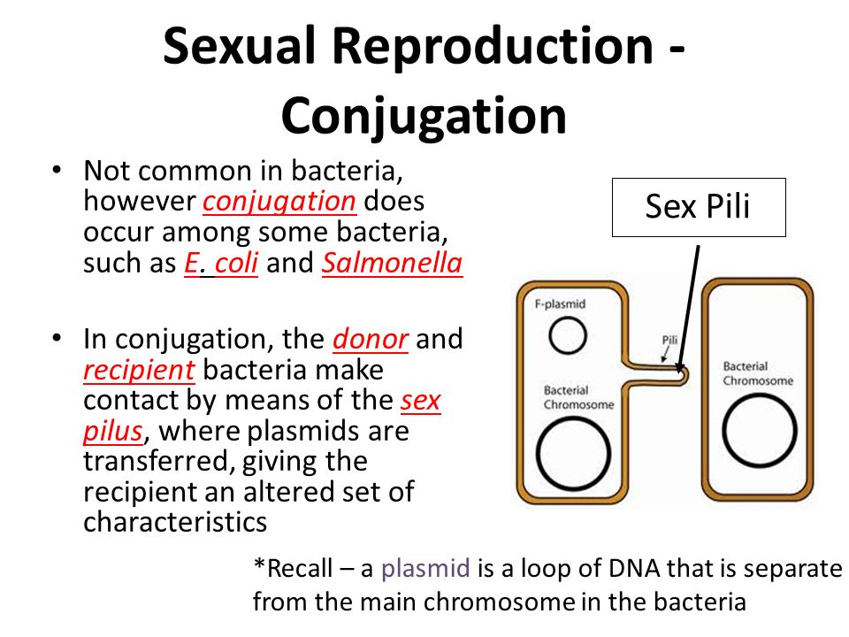 Define sexual reproduction in bacteria