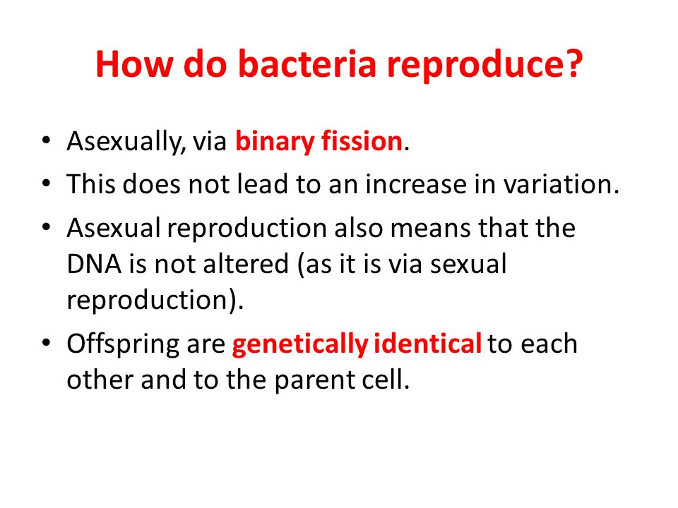 How can bacteria reproduce asexually