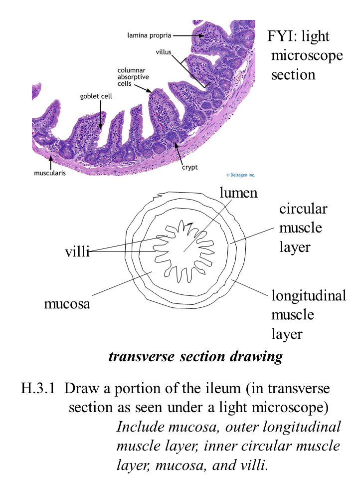 221 draw a generalized prokaryotic cell as seen in electron 38 h31 ccuart Image collections