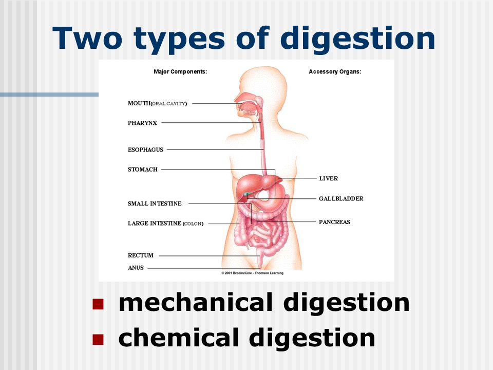 The Digestive System C15l2 Two Types Of Digestion Mechanical