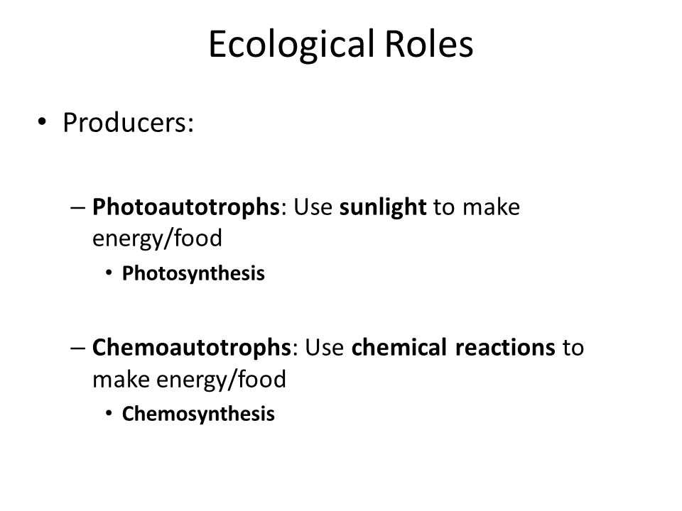 Ecological Roles Producers: – Photoautotrophs: Use sunlight to make energy/food Photosynthesis – Chemoautotrophs: Use chemical reactions to make energy/food Chemosynthesis