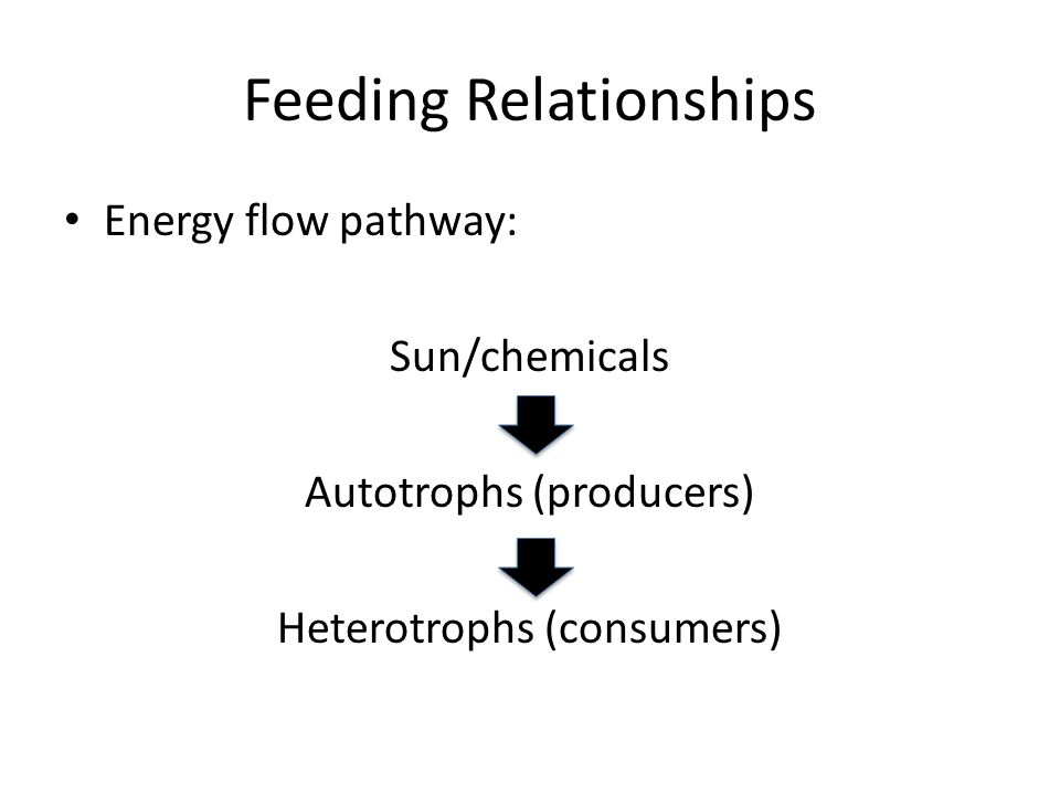 Feeding Relationships Energy flow pathway: Sun/chemicals Autotrophs (producers) Heterotrophs (consumers)