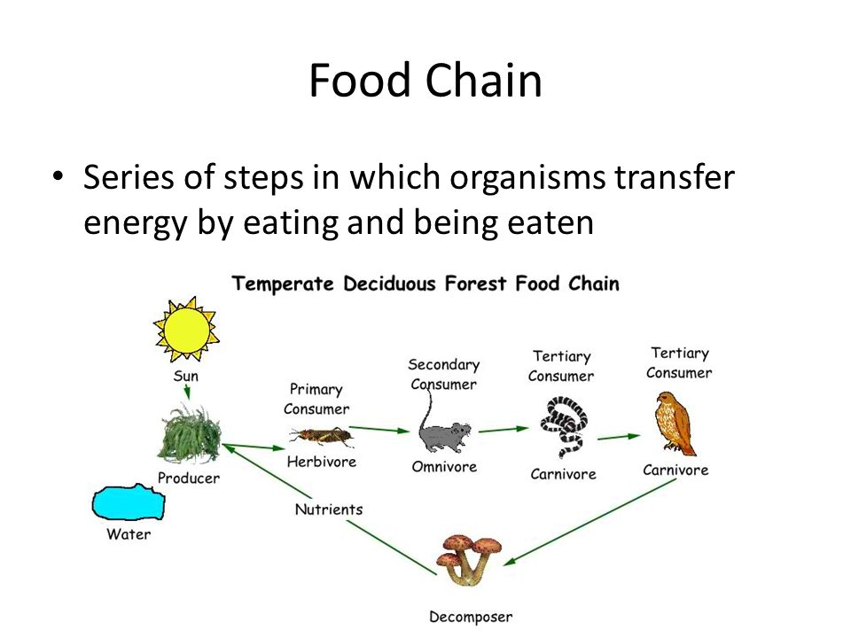 Food Chain Series of steps in which organisms transfer energy by eating and being eaten