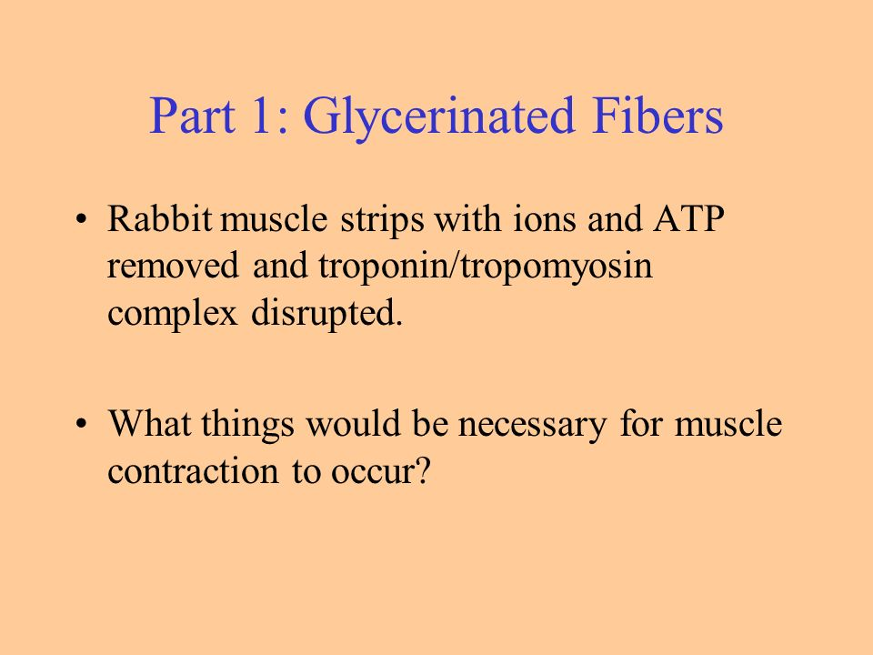 Skeletal Muscle Lab. Three Muscle Types Parts of the Muscle Fiber ...