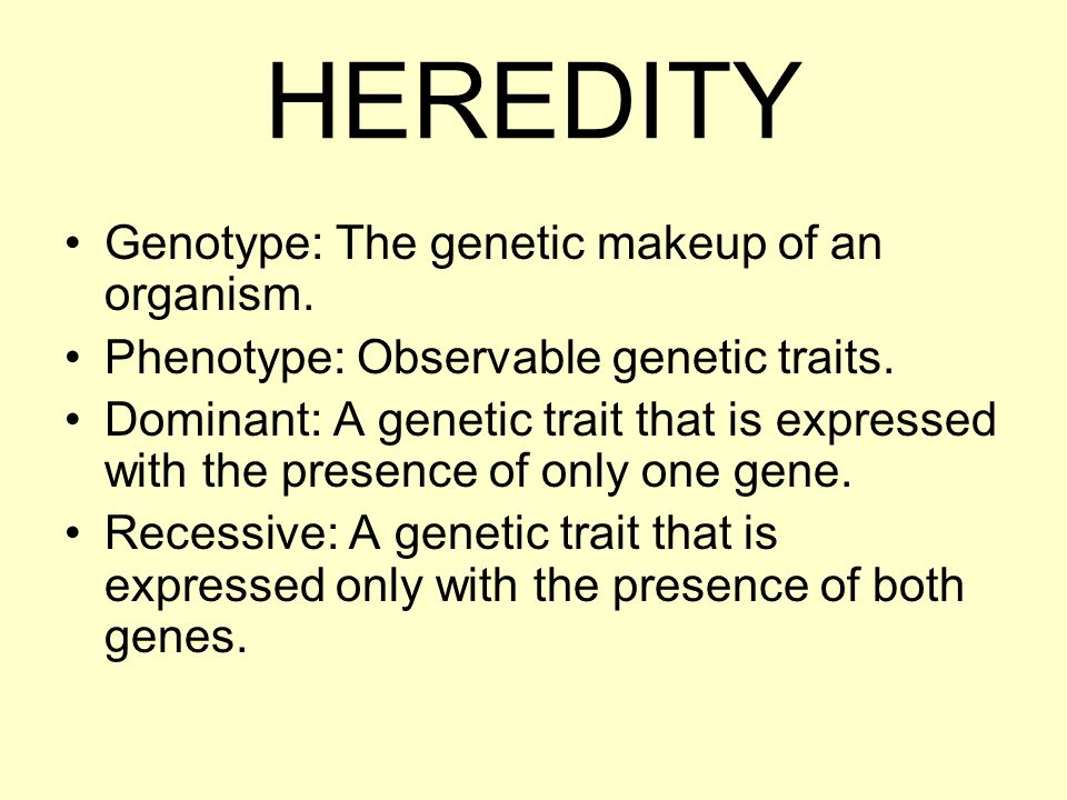 Genetic Makeup Of An Organism Mesmerizing HEREDITY Genotype The Genetic Makeup Of An Organism Phenotype