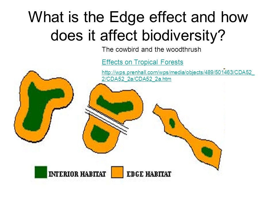 What is the Edge effect and how does it affect biodiversity.
