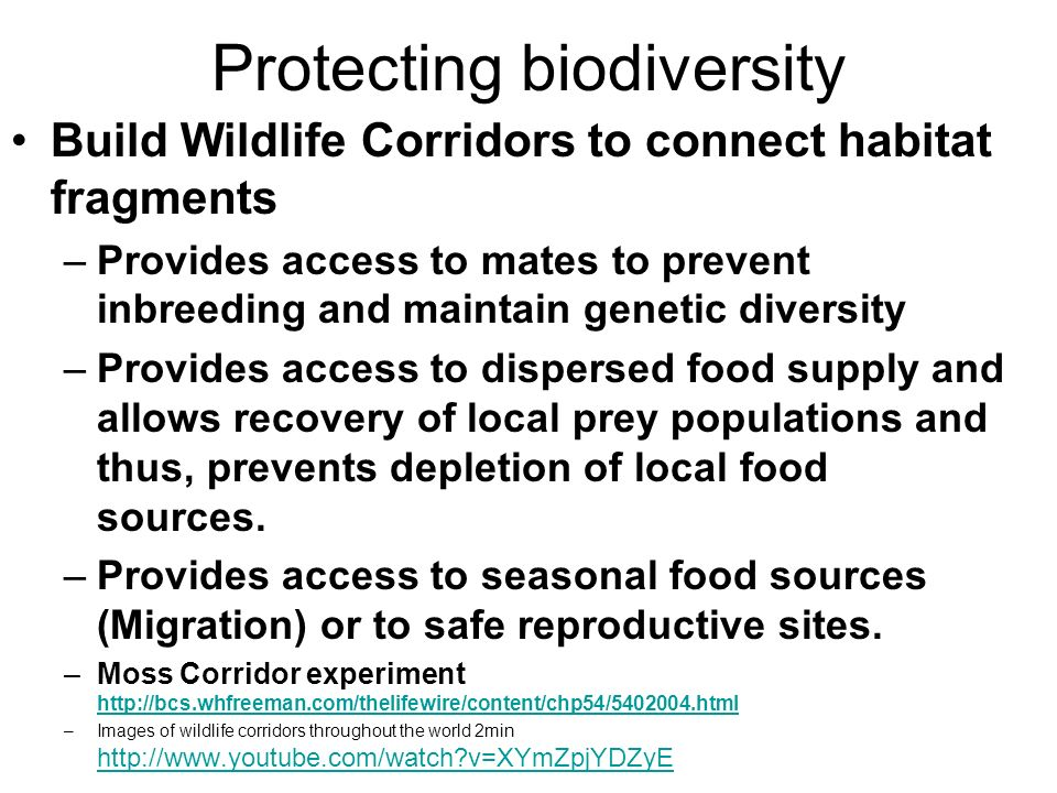 Protecting biodiversity Build Wildlife Corridors to connect habitat fragments –Provides access to mates to prevent inbreeding and maintain genetic diversity –Provides access to dispersed food supply and allows recovery of local prey populations and thus, prevents depletion of local food sources.