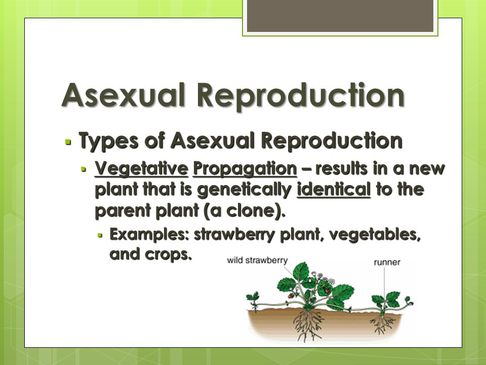 Asexual reproduction definition igcse results
