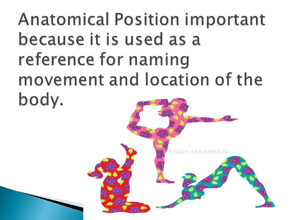 Anatomical Position  Location Terminology  Anterior/Posterior ...