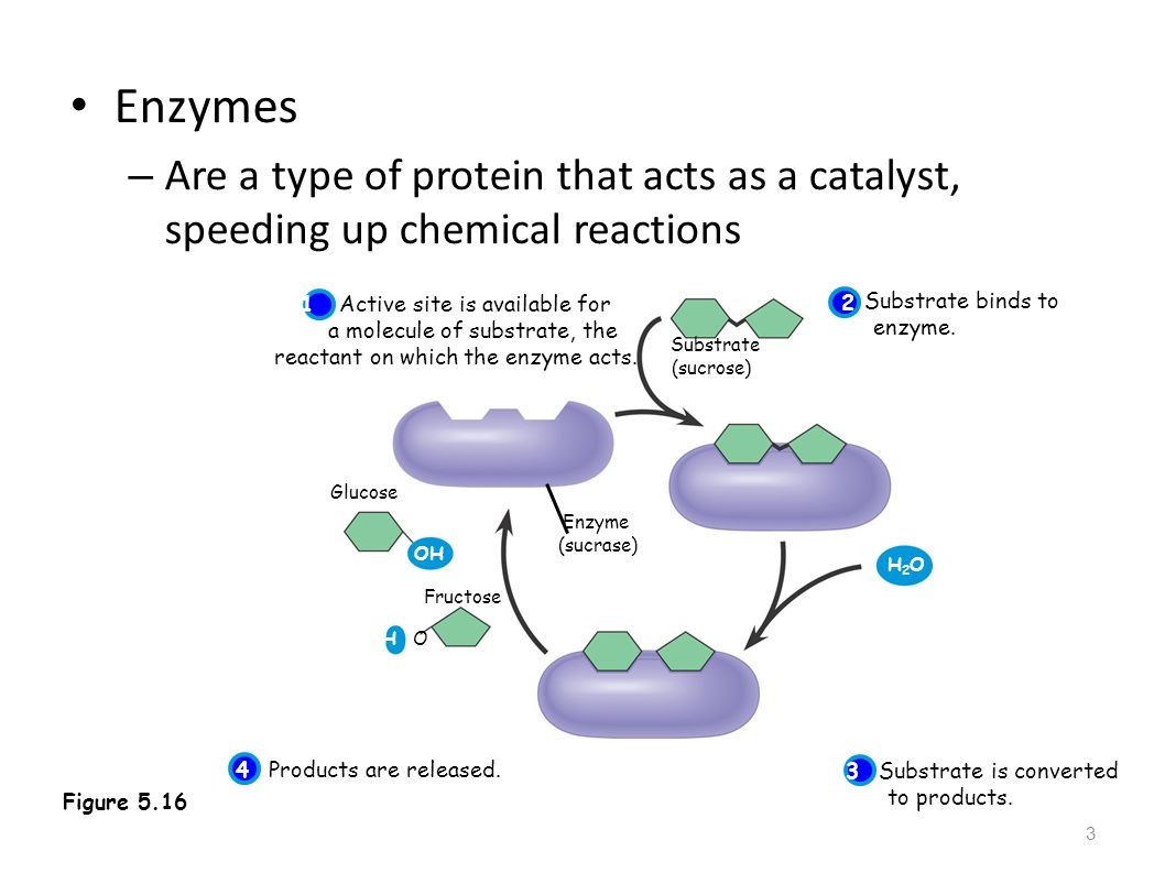 amylase and catalase enzyme catalysts biology essay Conclusion: the purpose of this lab was to observe the activity of the enzyme catalase in liver tissue, and to explain how different conditions effect the way the catalase reacts my group and i hypothesized that the activity would be most apparent in the grinded liver, very little in the boiled liver, and completely if not almost gone in the acid.