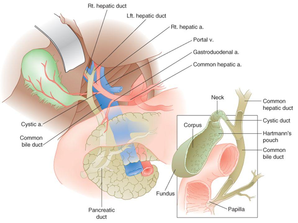 Gallbladder Cancer Surgical Management Ppt Download