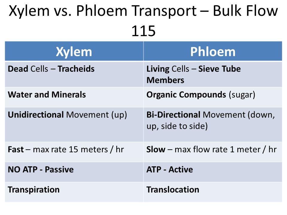 Xylem Vs Phloem Venn Diagram Diy Enthusiasts Wiring Diagrams
