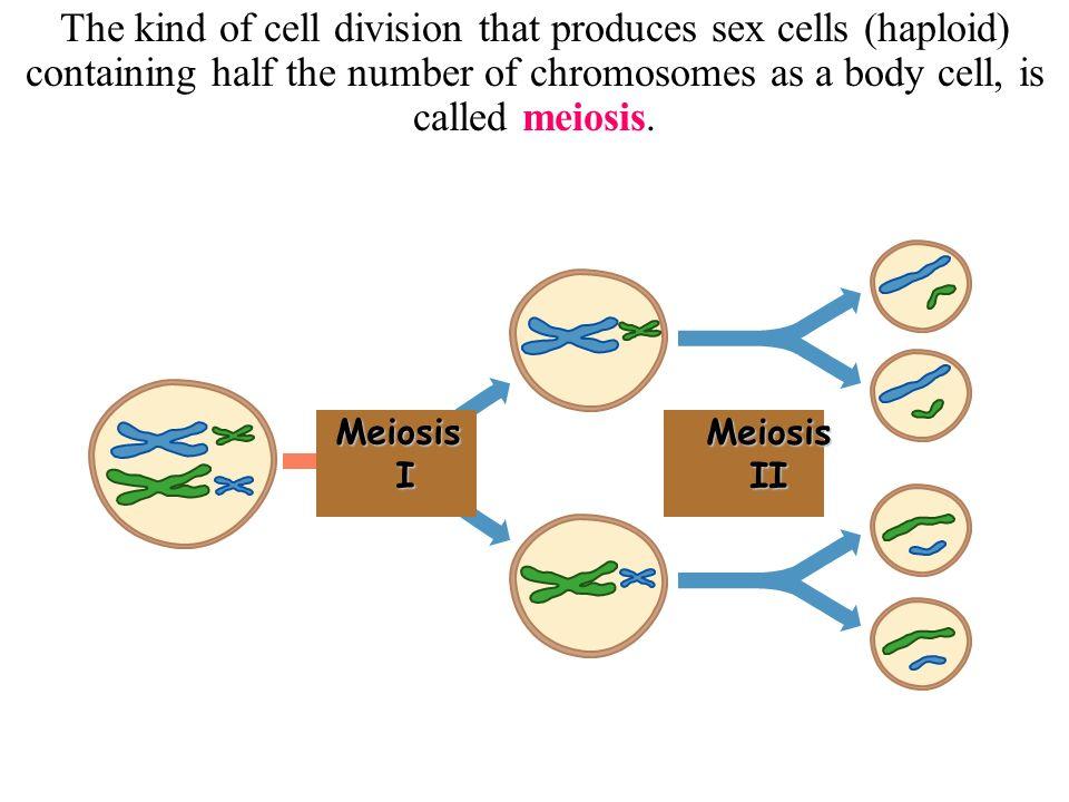 Sex on the floor meiosis