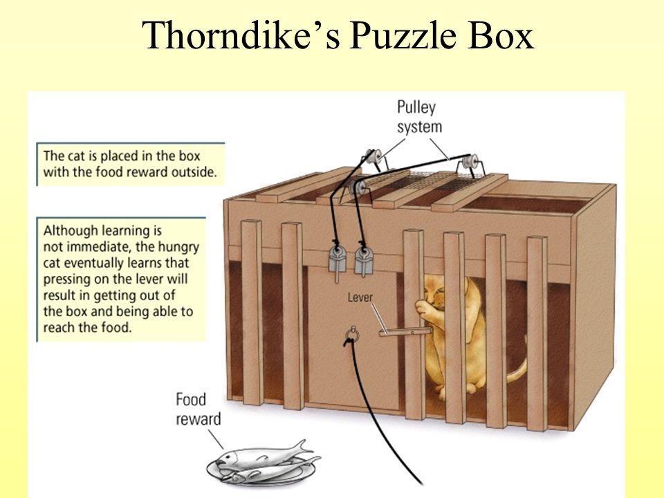 thorndike box