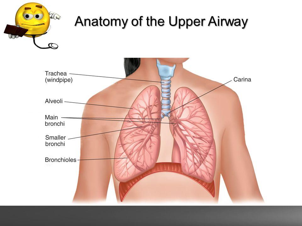 Airway and Respiratory Emergencies. Anatomy of the Respiratory ...