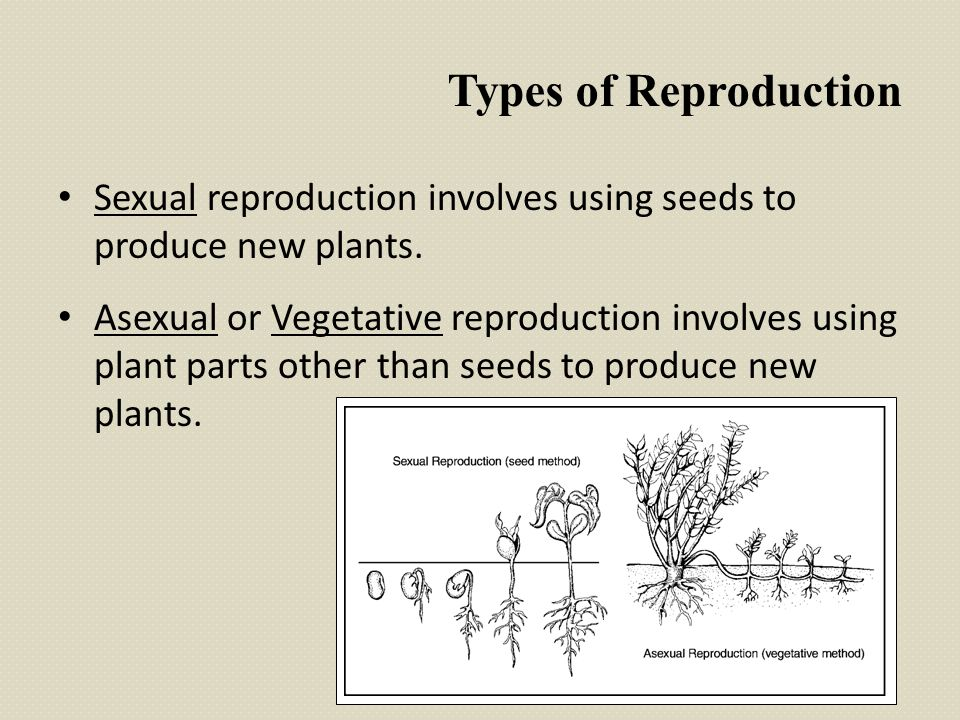 Asexual reproduction ppt download