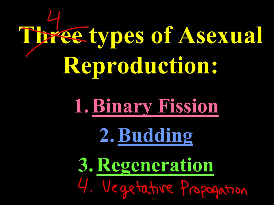 What is asexual reproduction advantageous movie