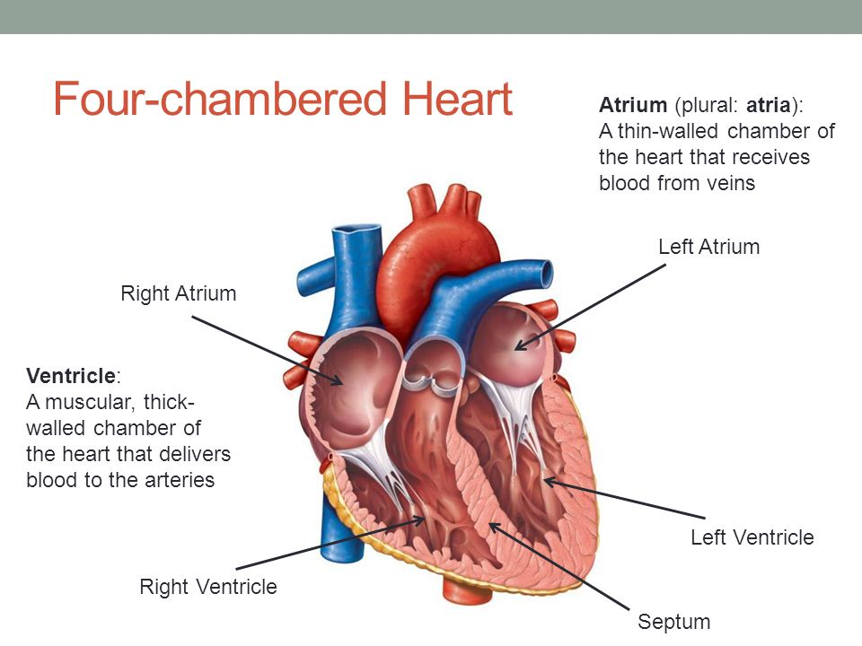The Heart Biology 20 Unit D Human Systems Pg Ppt Download