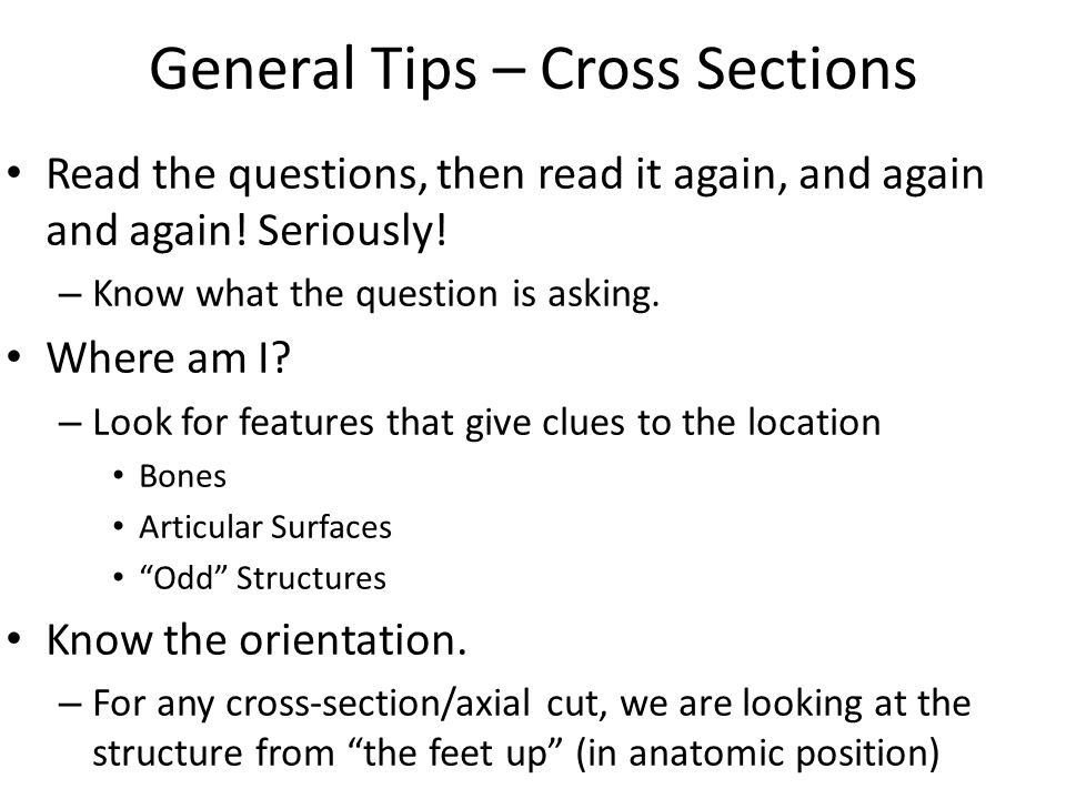 Anatomy Upper Extremity Prosection Radiology and Cross-Section ...