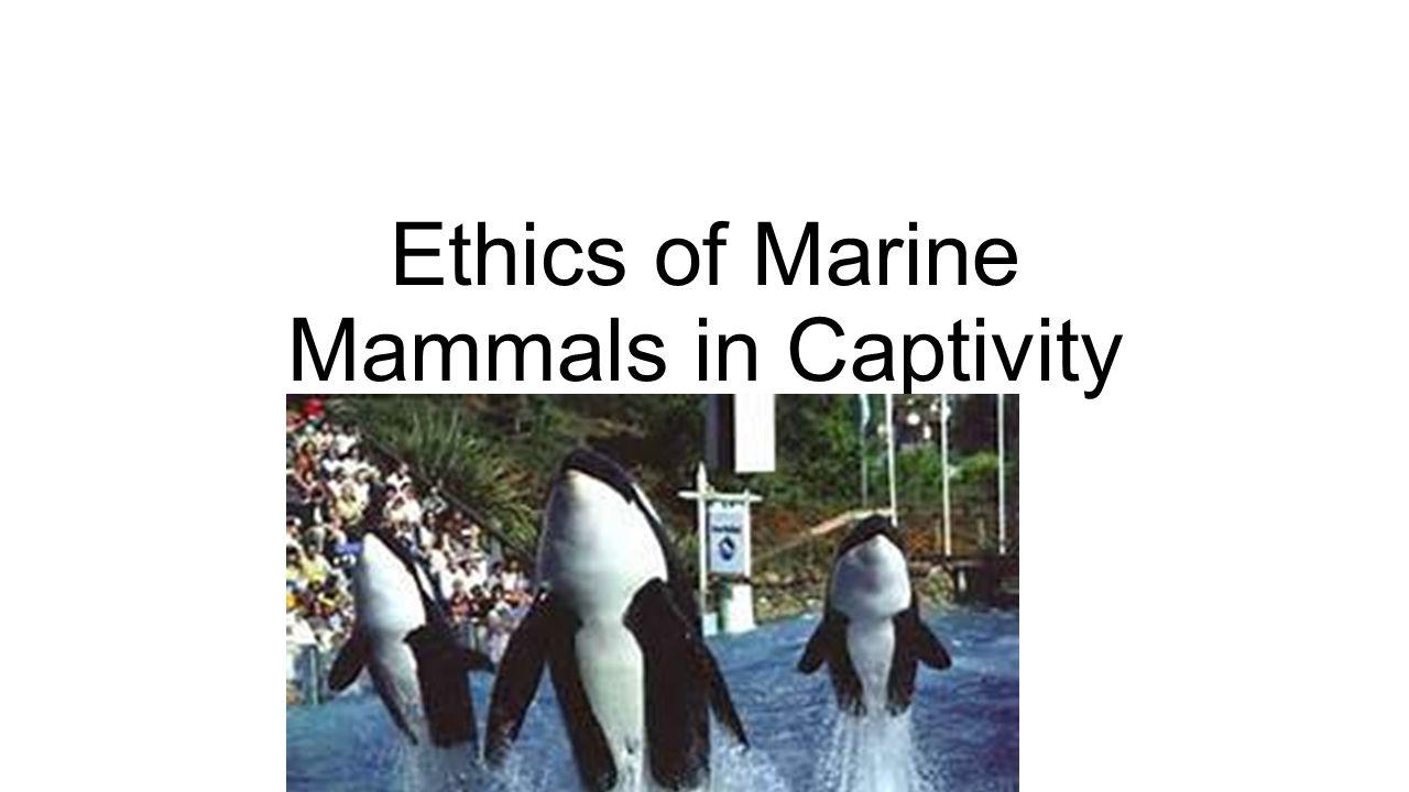 animals in entertainment pros