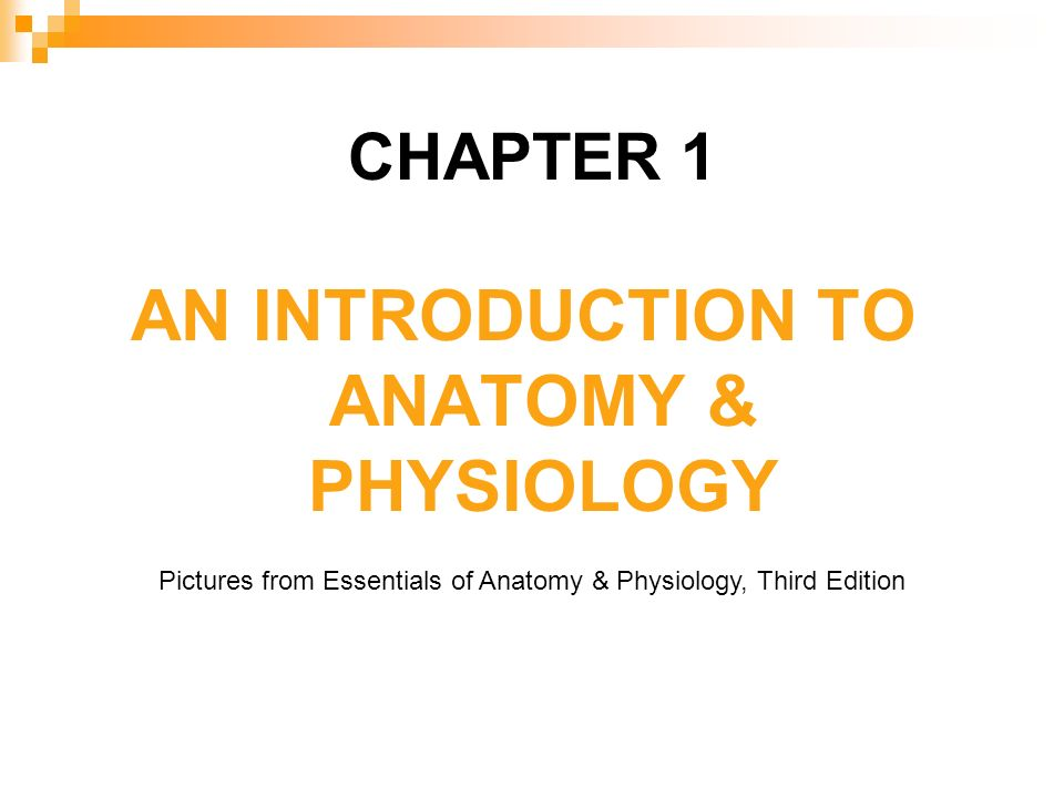 CHAPTER 1 AN INTRODUCTION TO ANATOMY & PHYSIOLOGY Pictures from ...