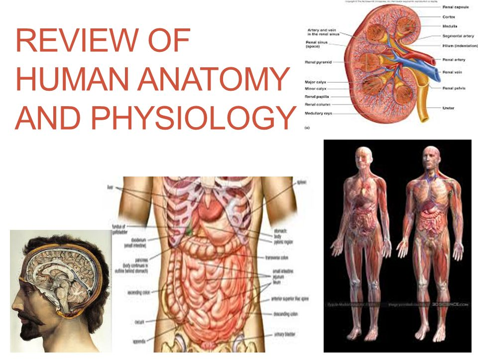 REVIEW OF HUMAN ANATOMY AND PHYSIOLOGY 7/11/2016SAP1 a, b, c ppt ...