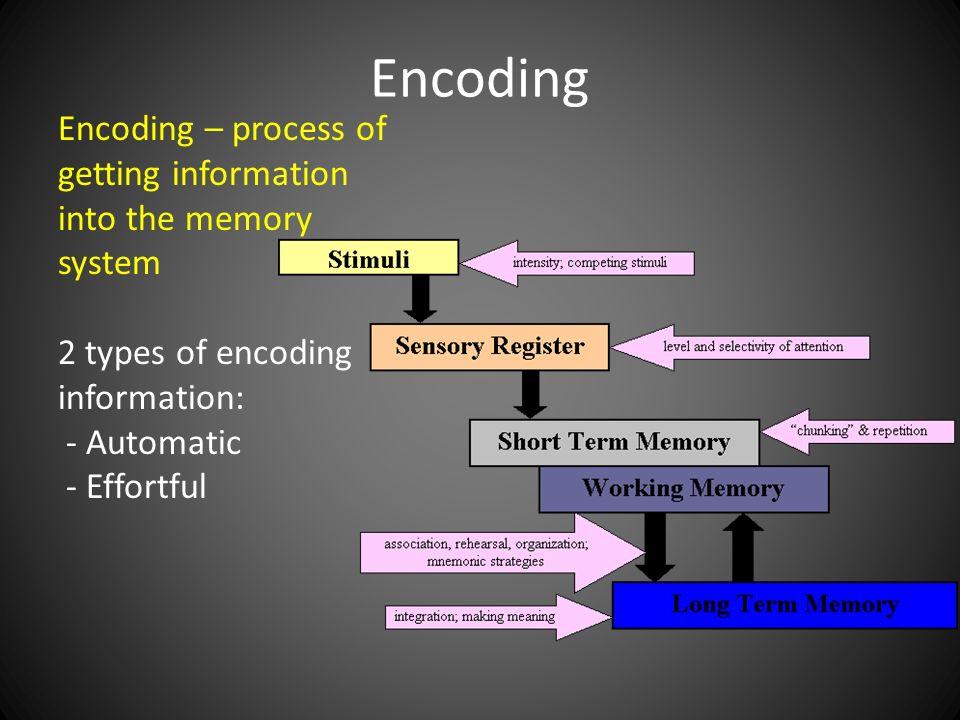 human memory and computer memory