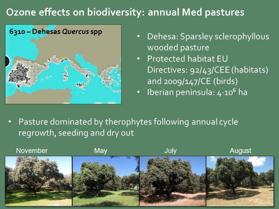 Quercus Spp NovemberMayJulyAugust Dehesa Sparsley Sclerophyllous Wooded Pasture Protected Habitat EU Directives 92 43 CEE Habitats And 2009 147 CE