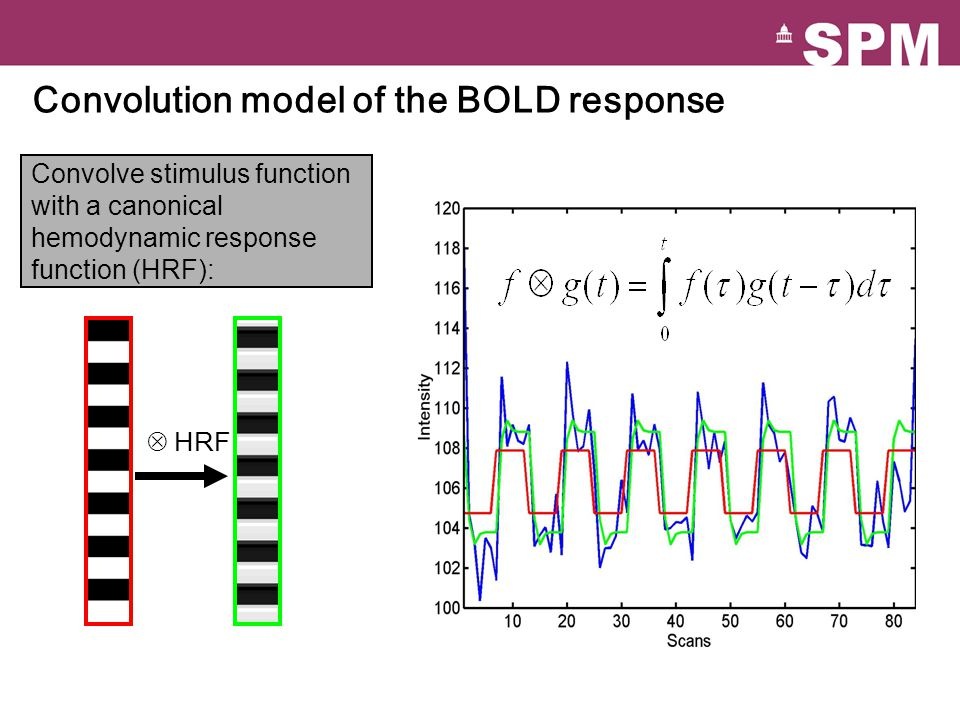Convolution model of the BOLD response Convolve stimulus function with a canonical hemodynamic response function (HRF): HRF