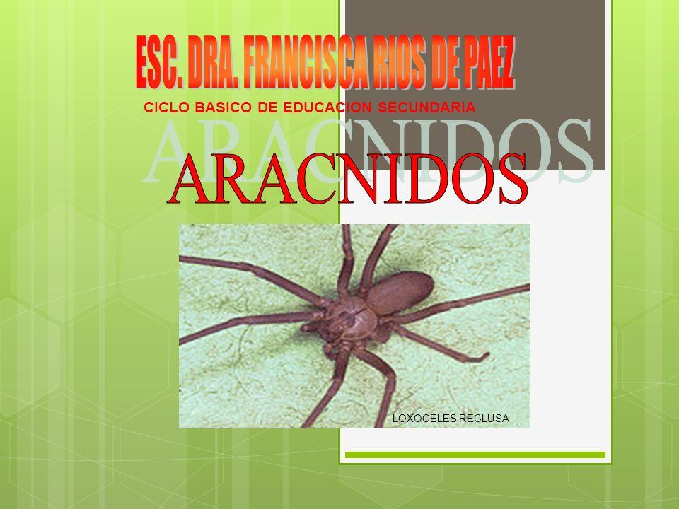 CICLO BASICO DE EDUCACION SECUNDARIA LOXOCELES RECLUSA. - ppt download