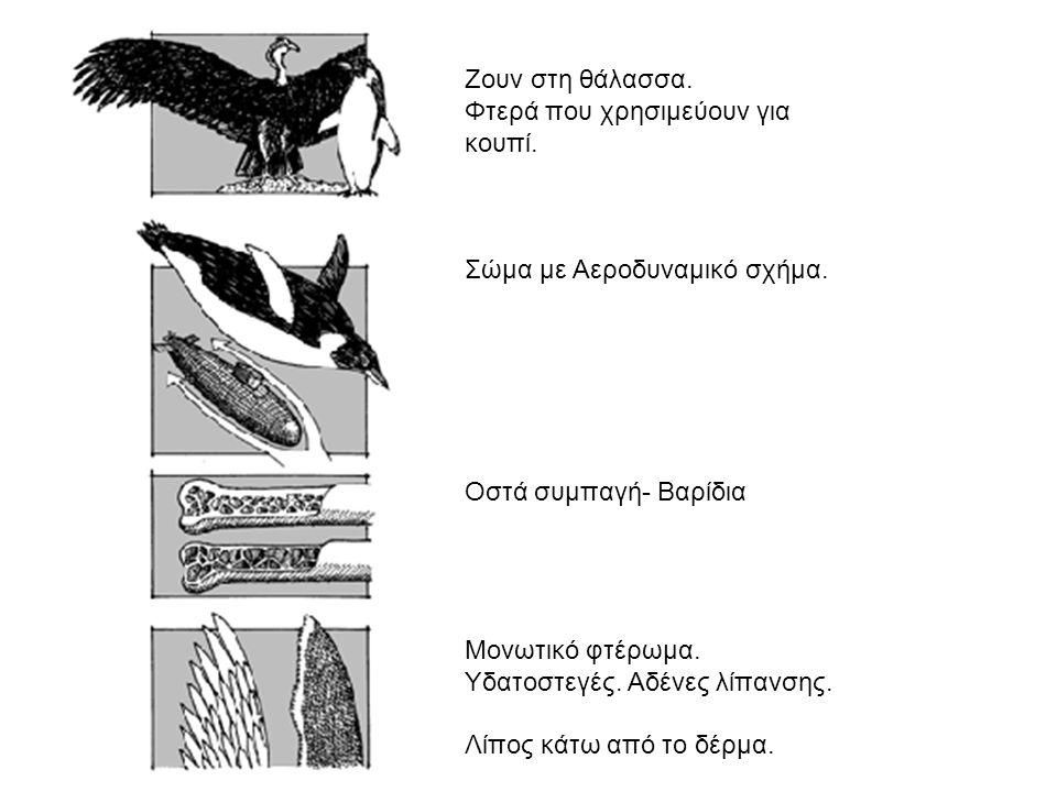 C14 που χρονολογούνται από τα οστά των δεινοσαύρων