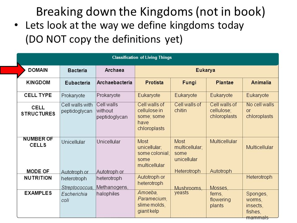 20 Breaking Down The Kingdoms