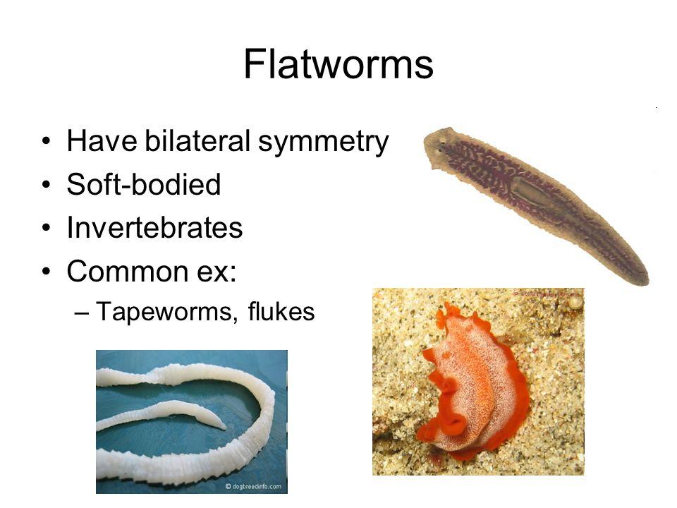 invertebrata platyhelminthes