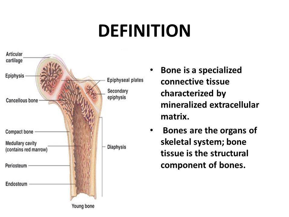 BONE Dr Iram Tassaduq DEFINITION Bone is a specialized connective ...
