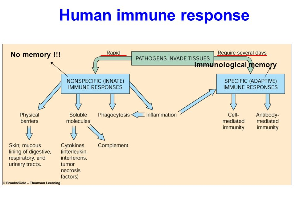Chapter 43 Page 831 Immune System Csaba Bodor Ppt Download