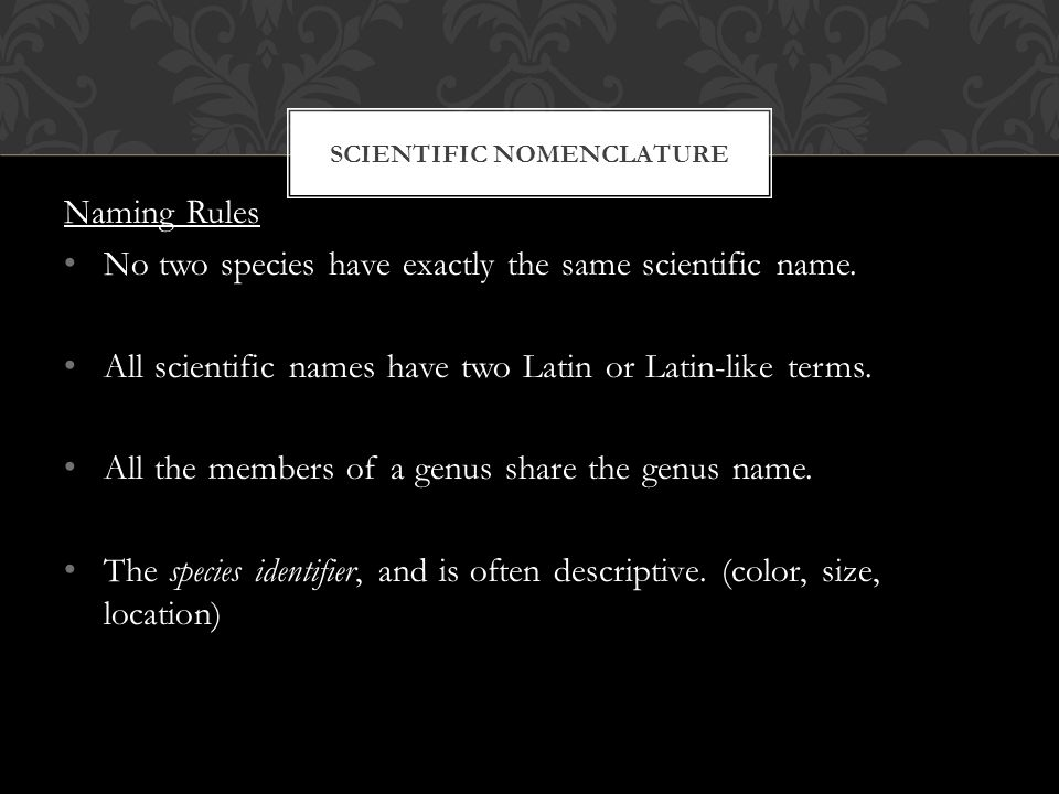 SCIENTIFIC NOMENCLATURE Naming Rules No two species have exactly the same scientific name.
