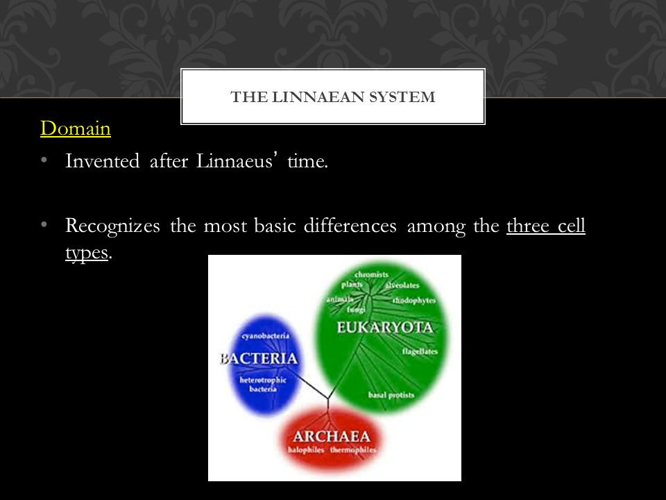 THE LINNAEAN SYSTEM Domain Invented after Linnaeus' time.