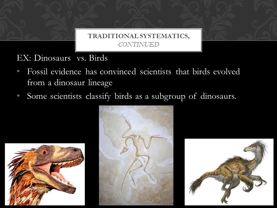 TRADITIONAL SYSTEMATICS, CONTINUED EX: Dinosaurs vs.