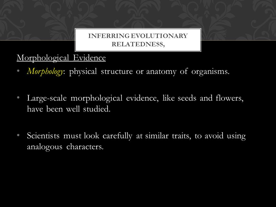 INFERRING EVOLUTIONARY RELATEDNESS, Morphological Evidence Morphology: physical structure or anatomy of organisms.