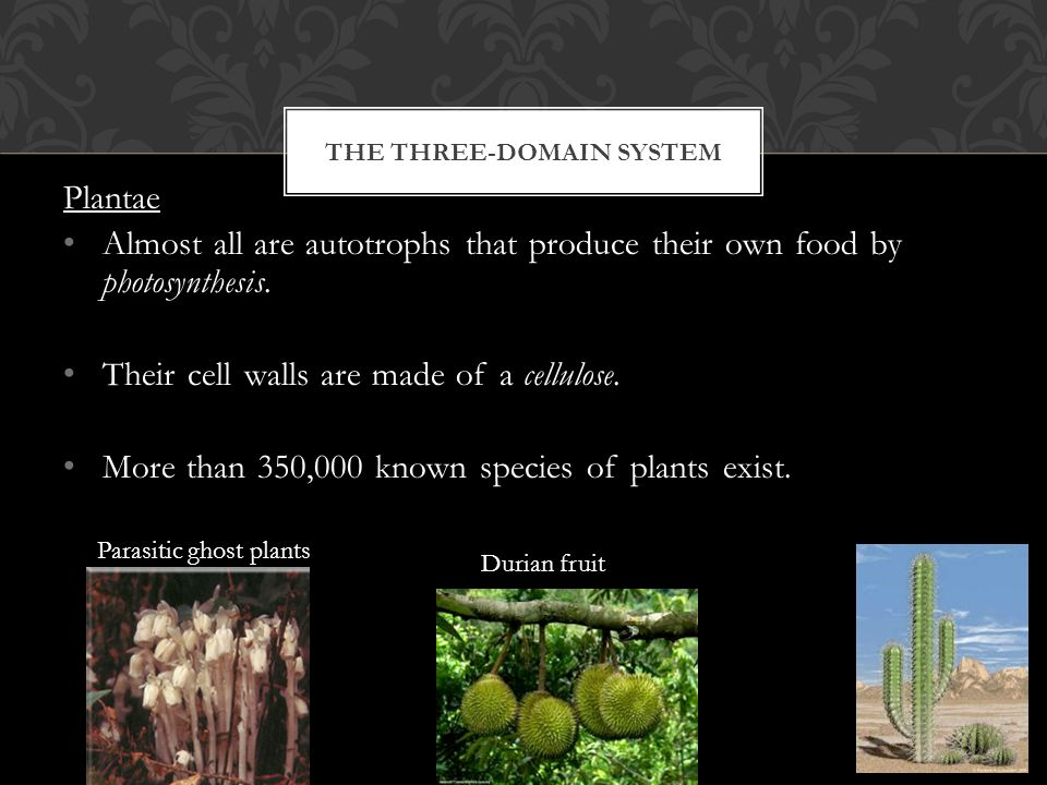 THE THREE-DOMAIN SYSTEM Plantae Almost all are autotrophs that produce their own food by photosynthesis.