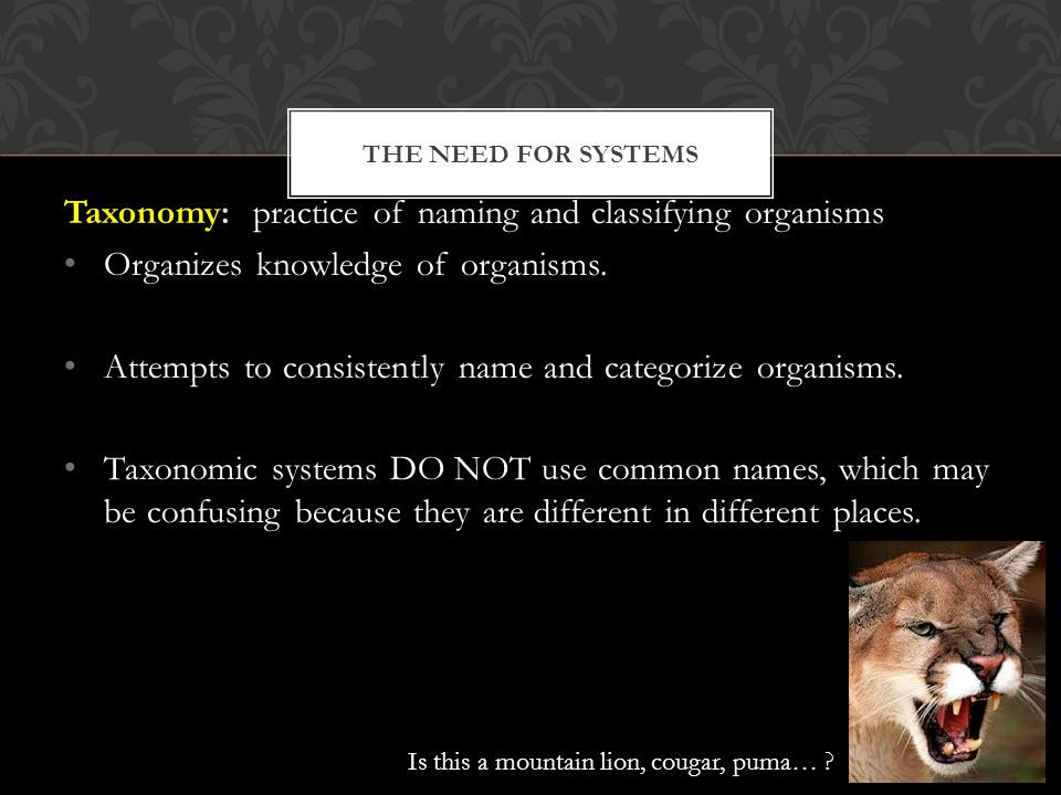 THE NEED FOR SYSTEMS Taxonomy: practice of naming and classifying organisms Organizes knowledge of organisms.