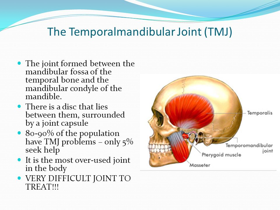 The Temporalmandibular Joint (TMJ) The joint formed between the ...